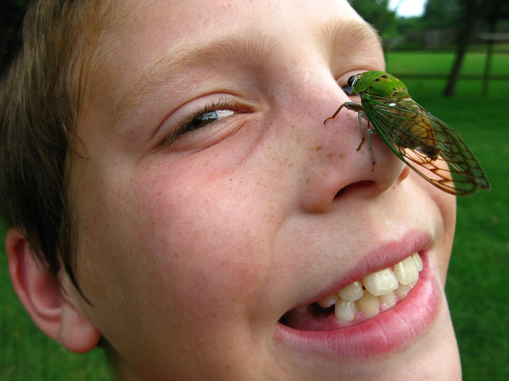 Breaking Free: A lesson from the Cicada